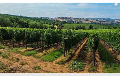 Perché ho scelto i vini di Pisa